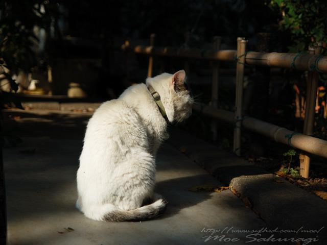 thinking_cat
