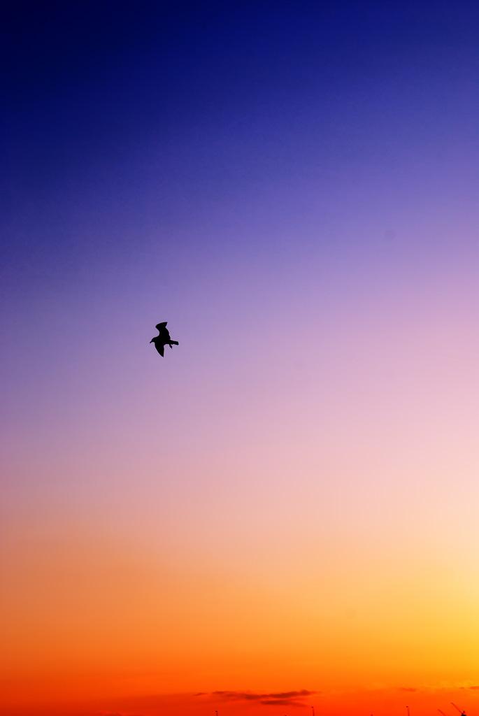fly001